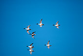 BRD 03 RK0030 10