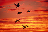BRD 03 RK0049 07