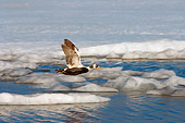 BRD 03 SK0002 01