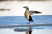 BRD 03 SK0007 01