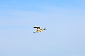 BRD 03 SK0009 01