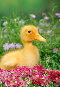 BRD 03 TK0002 01