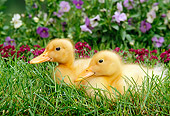 BRD 03 TK0004 01