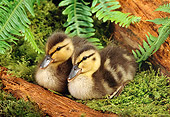 BRD 03 TK0006 01