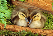 BRD 03 TK0006 02