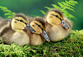 BRD 03 TK0007 01