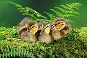 BRD 03 TK0007 02