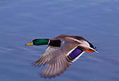 BRD 03 TL0008 01