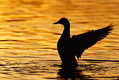 BRD 03 TL0009 01
