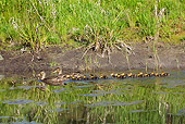 BRD 03 TL0016 01