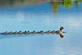 BRD 03 TL0017 01