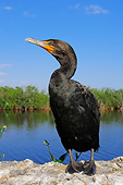BRD 04 AC0014 01