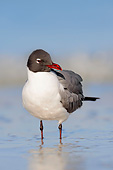 BRD 04 AC0018 01