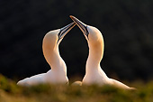 BRD 04 AC0025 01