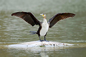 BRD 04 AC0032 01