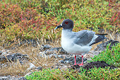 BRD 04 AC0034 01