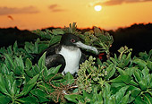 BRD 04 BA0001 01