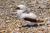 BRD 04 JM0003 01