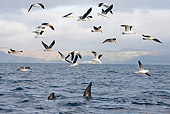 BRD 04 KH0007 01