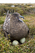 BRD 04 KH0015 01