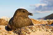 BRD 04 KH0016 01