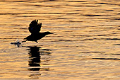 BRD 04 KH0027 01