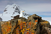 BRD 04 KH0035 01