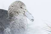 BRD 04 KH0045 01