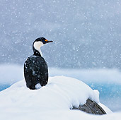 BRD 04 KH0048 01