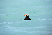 BRD 04 MC0002 01