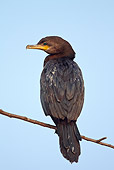 BRD 04 MC0004 01