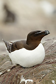 BRD 04 MC0010 01