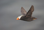 BRD 04 NE0016 01