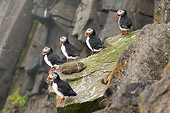 BRD 04 SK0003 01