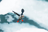 BRD 04 SK0017 01