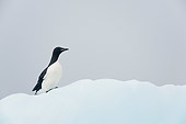 BRD 04 SK0023 01