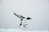 BRD 04 SK0024 01