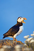 BRD 04 TK0004 01