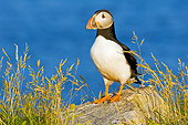BRD 04 TK0008 01