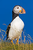 BRD 04 TK0009 01