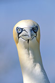BRD 04 WF0002 01