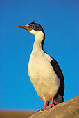 BRD 04 WF0008 01