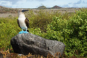 BRD 04 WF0010 01