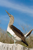 BRD 04 WF0011 01
