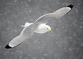 BRD 04 WF0015 01