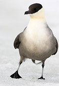 BRD 04 WF0017 01