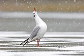 BRD 04 WF0024 01
