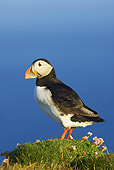 BRD 04 WF0025 01