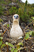 BRD 04 WF0030 01