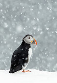BRD 04 WF0033 01